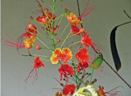 thaiflower
